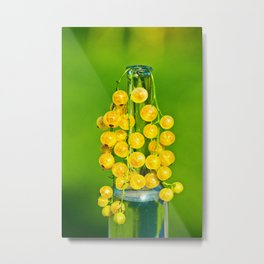 Currants yellow in the bottle Metal Print