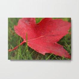 Canada fall colours Metal Print