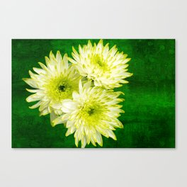 Chrysanthemums on Green Canvas Print