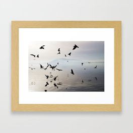 dancing birds Framed Art Print