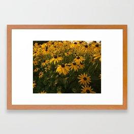 Drake Park Flowers...Dawn Framed Art Print
