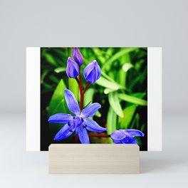 Scilla/Blausterne Mini Art Print