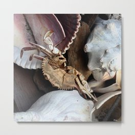 Crabe &Coquillages Metal Print