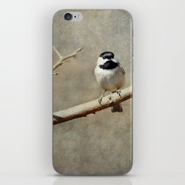 Black-capped Chickadee iPhone Skin