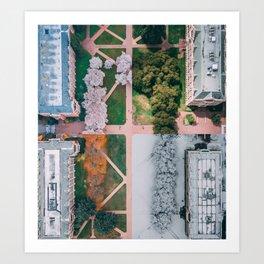 UW Cherry Blossoms: 4 Seasons Art Print