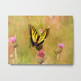 Tiger Swallowtail Butterfly on Thistles Metal Print