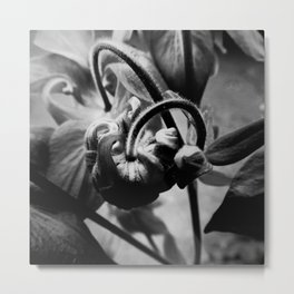 Flower In Black And White #1 Metal Print
