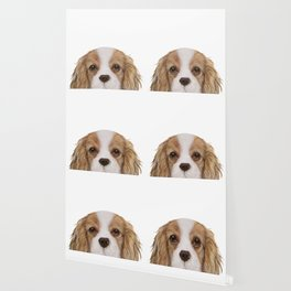 Cavalier King Charles Spaniel Dog illustration original painting print Wallpaper