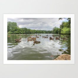Beauty of the Lake Art Print