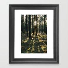 Sunlight through a dense forest. Norfolk, UK. Framed Art Print