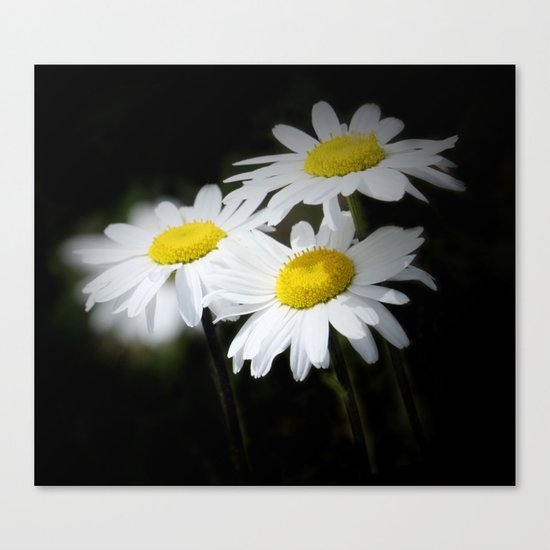 daisies on black Canvas Print