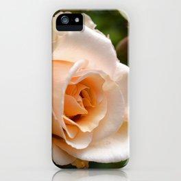 Pretty As A Peach - Flower Art iPhone Case