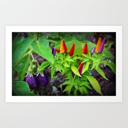 Colorful Peppers Art Print