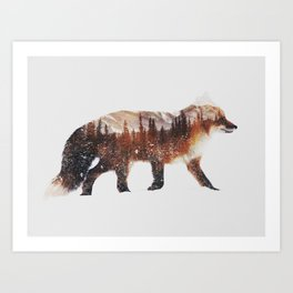 Arctic Red Fox Art Print