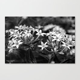 Black and white Canvas Print