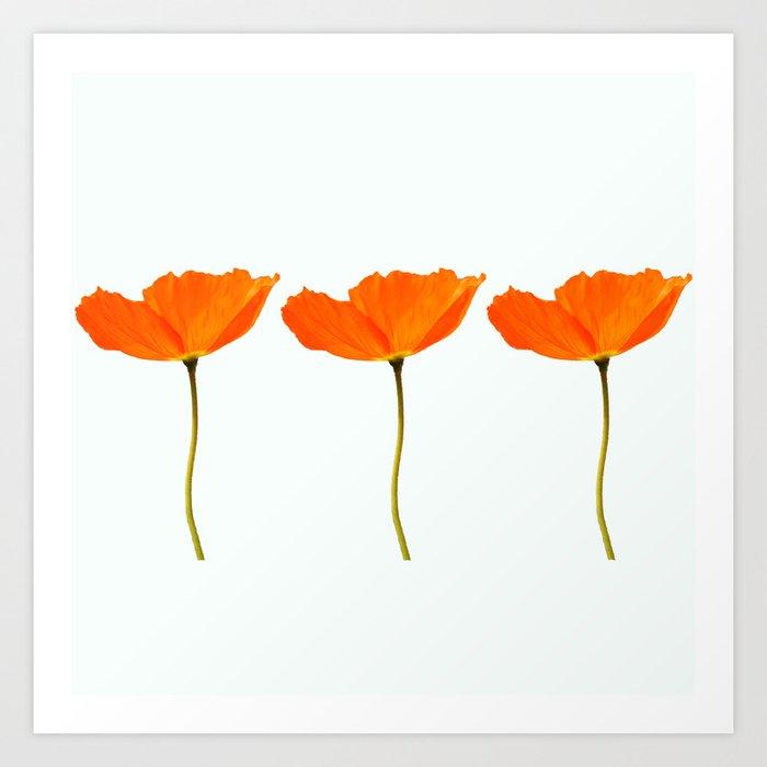 Three Orange Poppy Flowers White Background Decor Society6 Buyart Art Print By Pivivikstrm