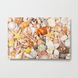 Seashells Background Metal Print