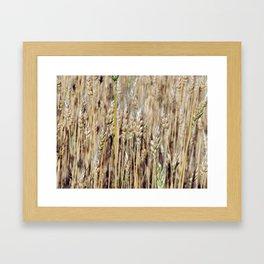 Wheat field texture of hay Framed Art Print