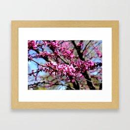 Early Spring in Minnesota! Framed Art Print