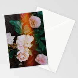 Roses with light leak Stationery Cards