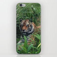 Everyone runs from Sher Khan iPhone & iPod Skin