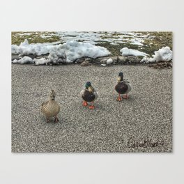 Friendly Ducks at Vander Veer Botanical Park Canvas Print
