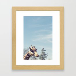 giraffe... Framed Art Print