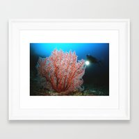 diver Framed Art Prints featuring diver by Anika Wilson