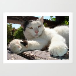 Black and White Bicolor Cat Lounging on A Park Bench Art Print
