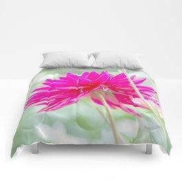 Dalia Comforters