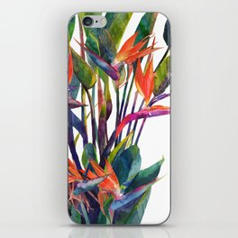 The bird of paradise iPhone Skin