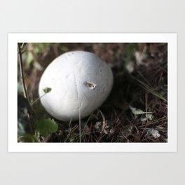 The Puffball Art Print