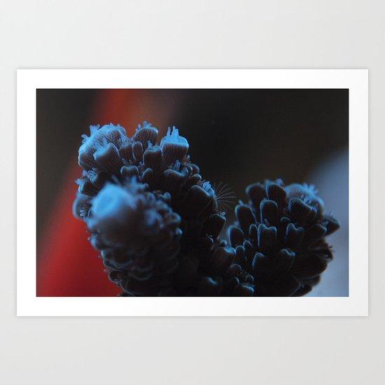 Acropora Coral Art Print