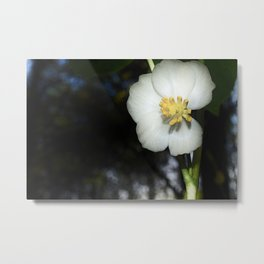 May Apple Metal Print