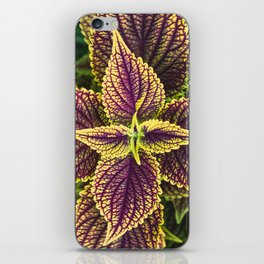 Plant Patterns - Coleus Colors iPhone Skin