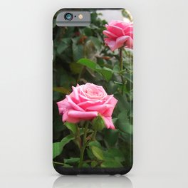 Pink Roses in Anzures 5  Blank P4F0 iPhone Case
