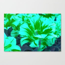 seafoam green tulips Canvas Print