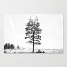 Black and White Pine Canvas Print