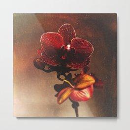 Orchidaceae Amoris Metal Print