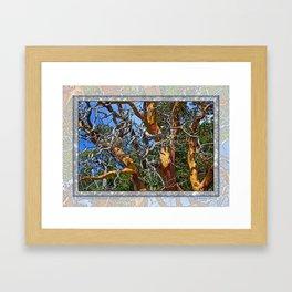 MADRONA TREE DEAD OR ALIVE Framed Art Print