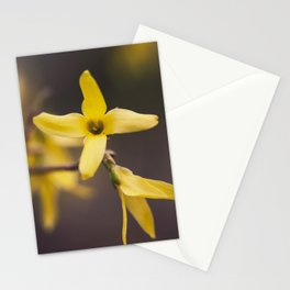 Forsythia Stationery Cards