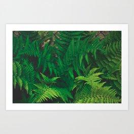 Leaf jungle Art Print