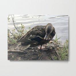 Oh Sh#t!, duck! Metal Print