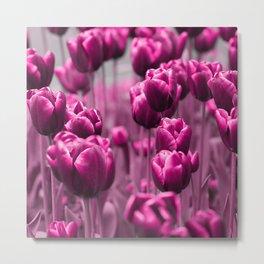 Tulips 035 Metal Print
