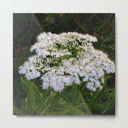 Neem Flowers Metal Print