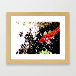 Orange Koi Framed Art Print