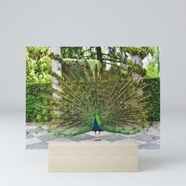 Peacock in Parque de El Retiro Mini Art Print