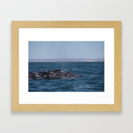 Cecilia, Pacific Gray Whale, Framed Art Print