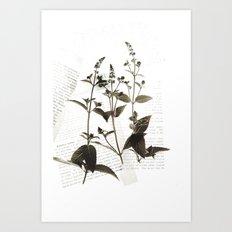 Botanical Catalogue 1 Art Print