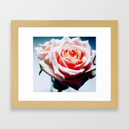 Adorable White and Pink Rose Framed Art Print